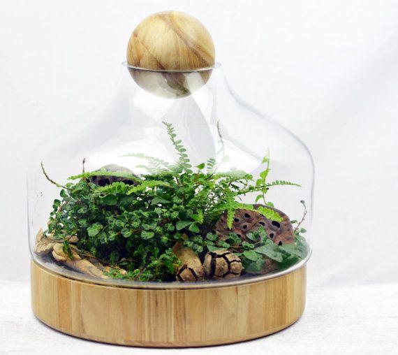 Ajouter quelques paix et sérénité à votre maison avec ce terrarium en verre moderne chic détaillé avec un socle en bois et un plateau en bois