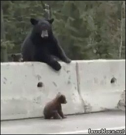 lawebloca: Mother Bear Rescues Baby Bear come here you little brat what did i tell you about playing in the freeway???