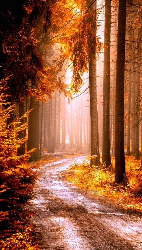A Day in the Foggy Woods  -