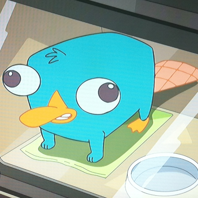 Cute perry the platypus baby perry the platypus