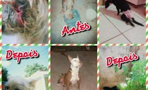 Cuidadora anuncia fechamento de abrigo de cães em Cuiabá