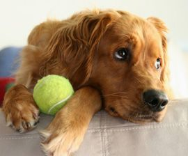 Activities for Dogs to do Alone: Find out how to keep your dog entertained when you don't have the time. | Dog Fancy