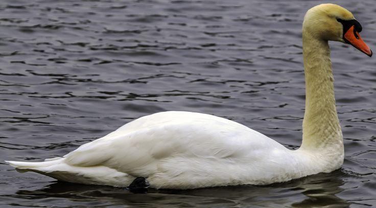Ved Brede sø