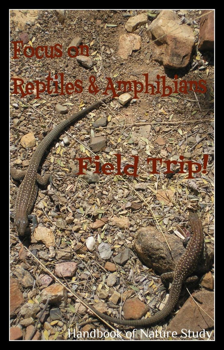 Amphibians Journal 1000+ images about Nat...
