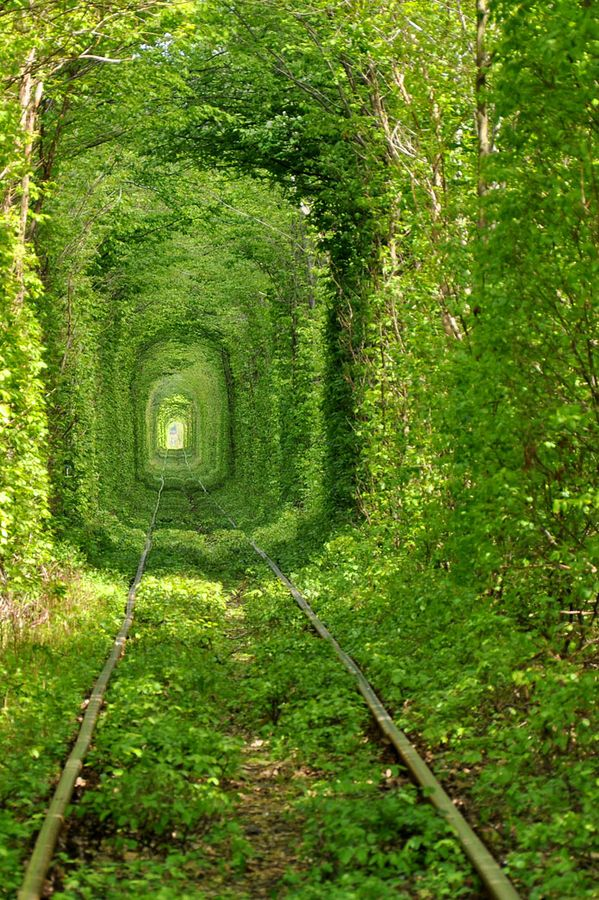 ...A living tunnel! This has got to be one of the most beautiful train tunnels in the world and can be found near the town of Klevan, 25 km NW of the city of Rivne, in Ukraine. It is very poetically named 'The Tunnel of Love' by the locals and during Summer the trees form a dense green tunnel along one kilometer (0.6 mi) long section of the railway.