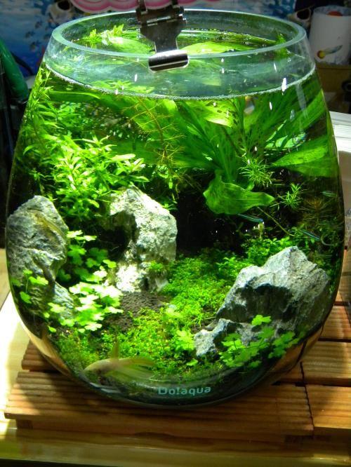 167 best planted nano aquariums images on pinterest for Aquarium bocal