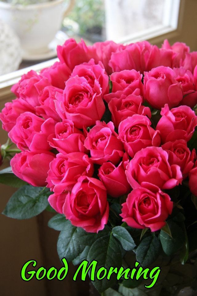 Pin By Fufu On Good Morning Images Rose Flower Wallpaper Good Morning Flowers Rose Flower Photos
