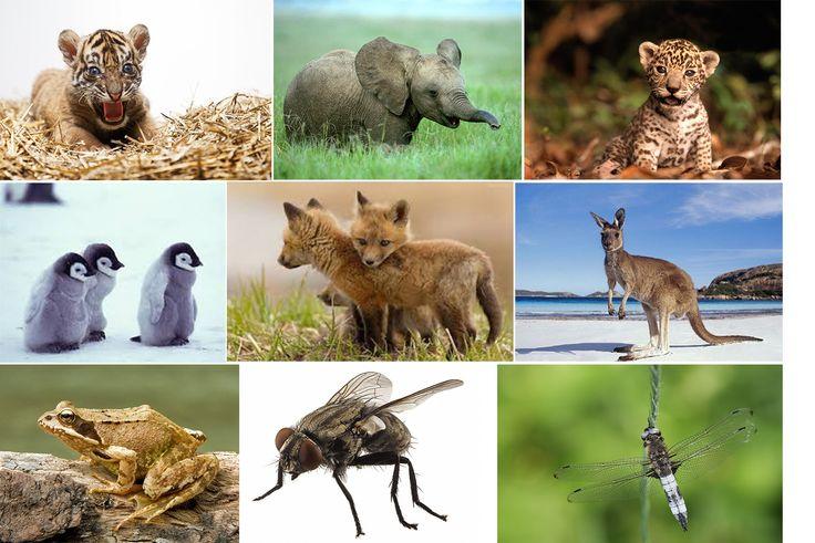 Montessori poznávací kartičky k vytištění- mix zvířat