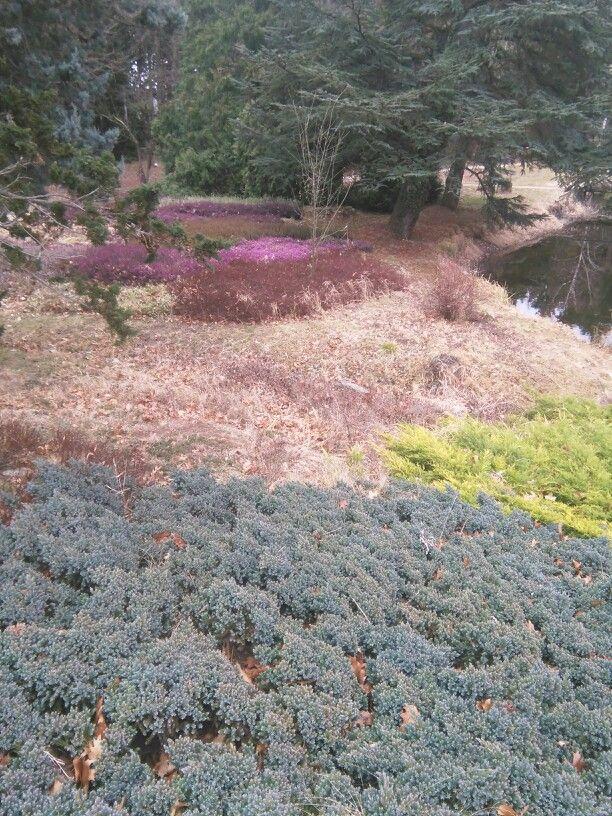 Kámoni Arboretum, Szombathely