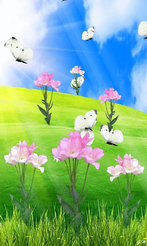 Download Animated 480x800 «Flowers & Butterflies» Cell ...