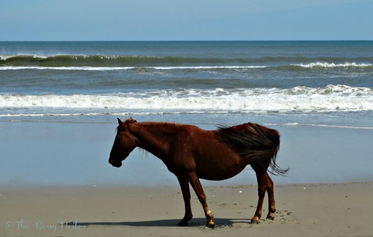 #pinyourlove #Corolla #wildhorse #beach #ocean #OBX #picmonkey