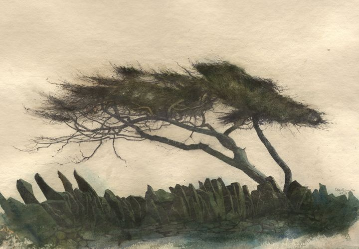 Stone Wall & Pine, an original drawing by Rob Piercy