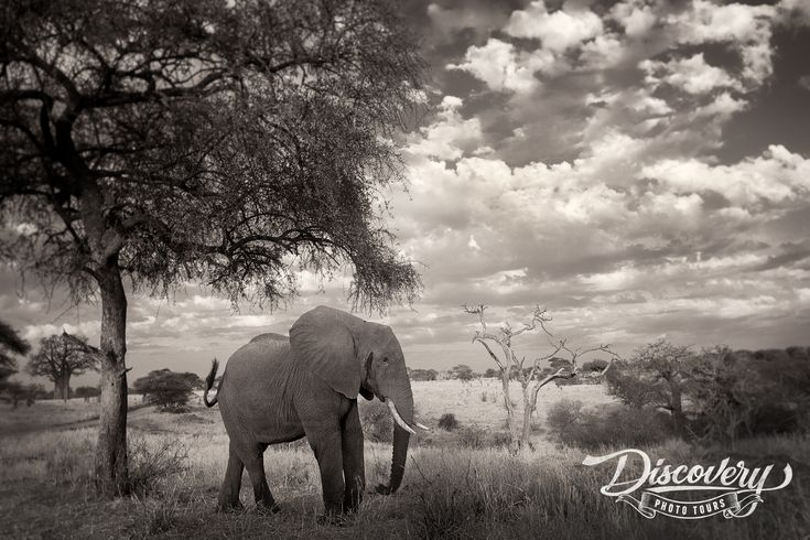 Join Me in Tanzania for the Adventure of a LifetimeThis August & September me and a team of Discovery Photo Tours photographers will be traveling to Africa and witness the Great Migration on the plains of the Serengeti during the 2018 Tanzania VIP Photo Safari. Get ready for the adventure of a lifetime!For this tour, …