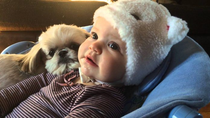 Top 10 Kids-Friendly Dogs  What and how do you define the qualities of a kid-friendly dog? A dog who is gentle with children and loyal? Or a dog who regards everyone in the family as its pack leader? Or a dog who is protective to his/her owner – our children? We list down the …