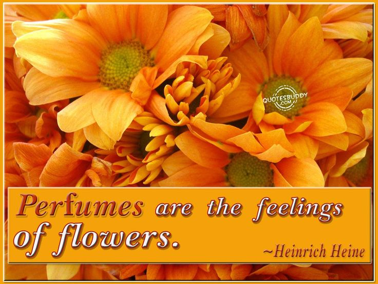 Perfumes are the feelings of flowers.  #YYC