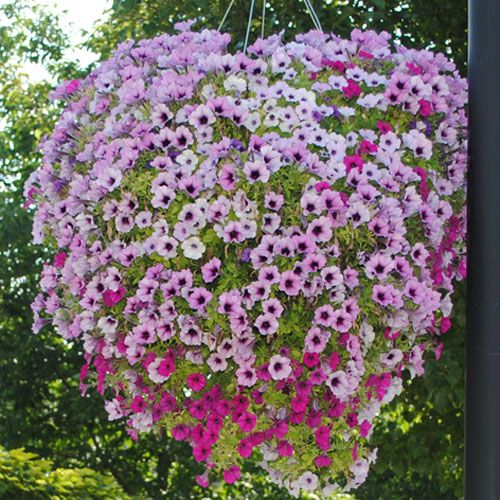 Hanging Basket Flowers Part Shade : Best images about hanging plants on