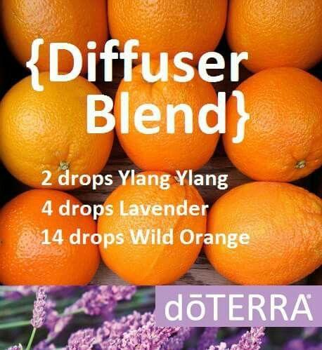 Ylang-ylang lavender wild orange