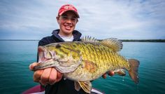 An angler catches a huge smallmouth bass.