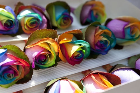 FOR NANCY-THE RAINBOW ROSE(THE HAPPY ROSE).I PRAY YOU ENOUGH  MY FRIEND