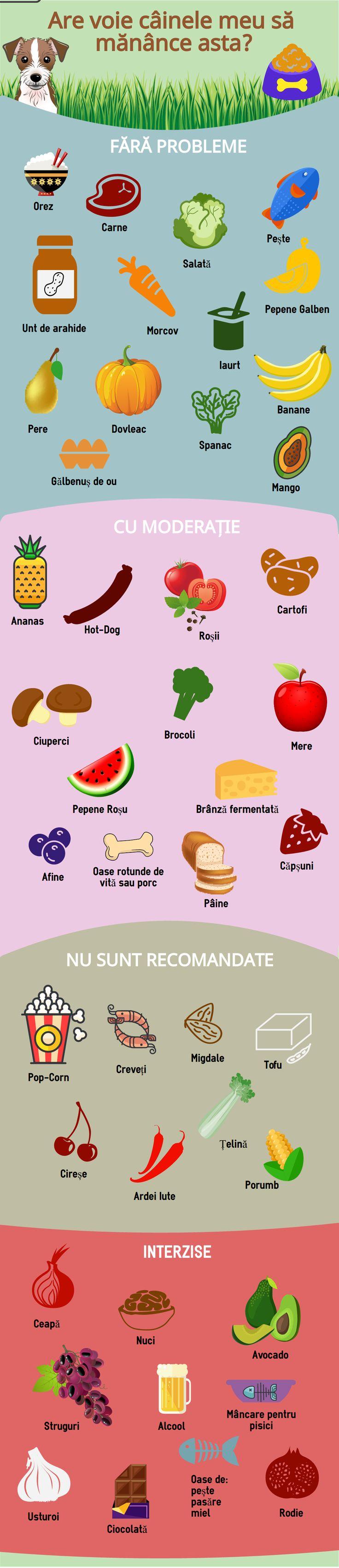 Un infografic cu ce au voie sa manance cateii dintre alimentele pe care le mancam si noi.  #pentruanimale