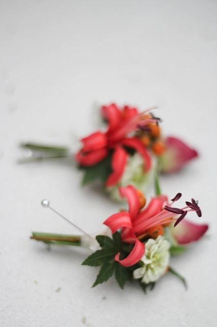 Buttonholes in coral. Nerine, rosebuds, Japanese maple leaf. Flowers by Petal& Sprout.