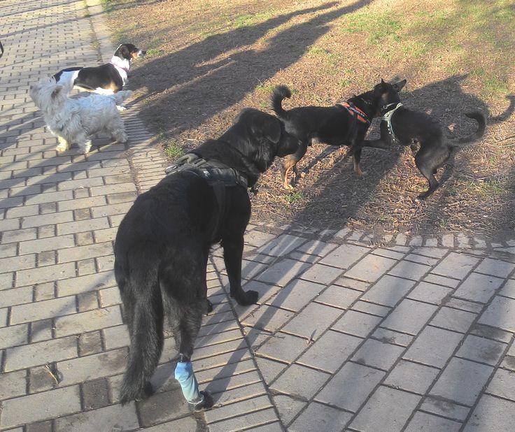 19/02/2016 - Torino con Lea, Axel, Peja e Zorba