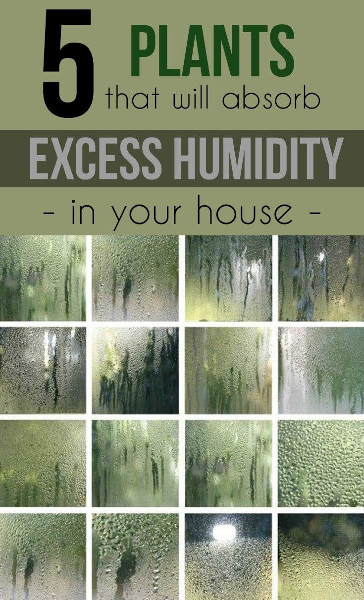 5 plants that will absorb excess humidity in your house.