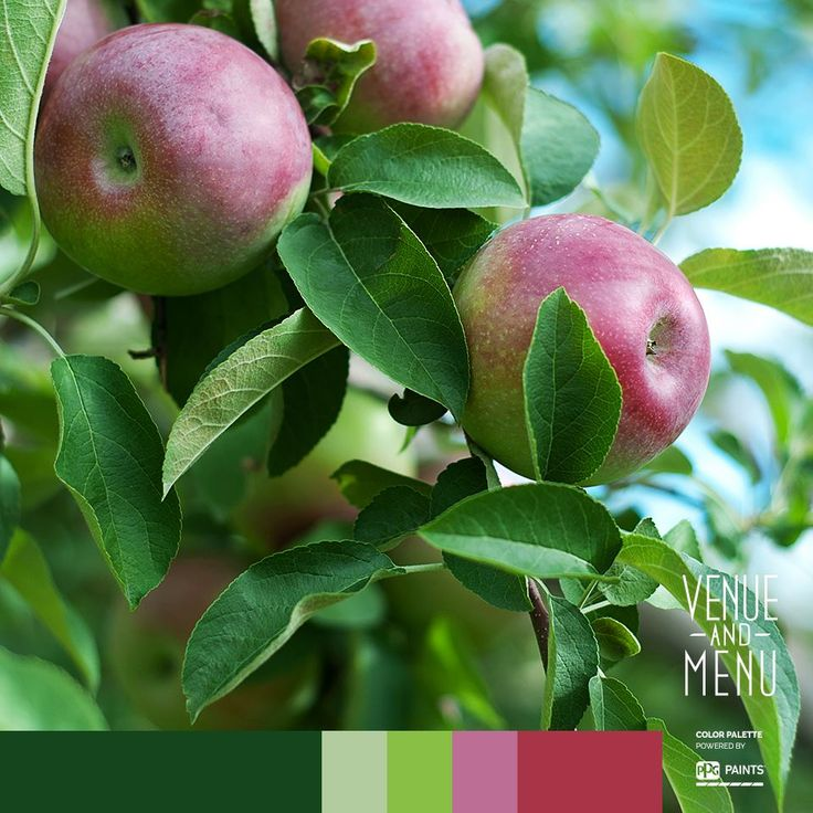 The truth is never pure and simple but an apple is. Enjoy an apple! #appleseason #appleofmyeye #venueandmenu