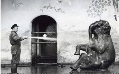 Warm hé,De olifant van de nieuwe dierentuin Diergaarde Blijdorp wordt door zijn oppasser natgespoten,1941