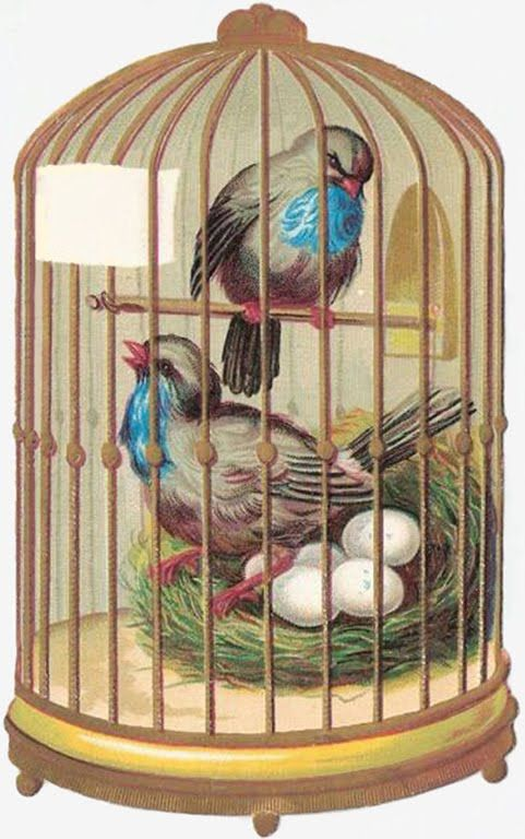 Хот вилс, птицы в клетке открытка