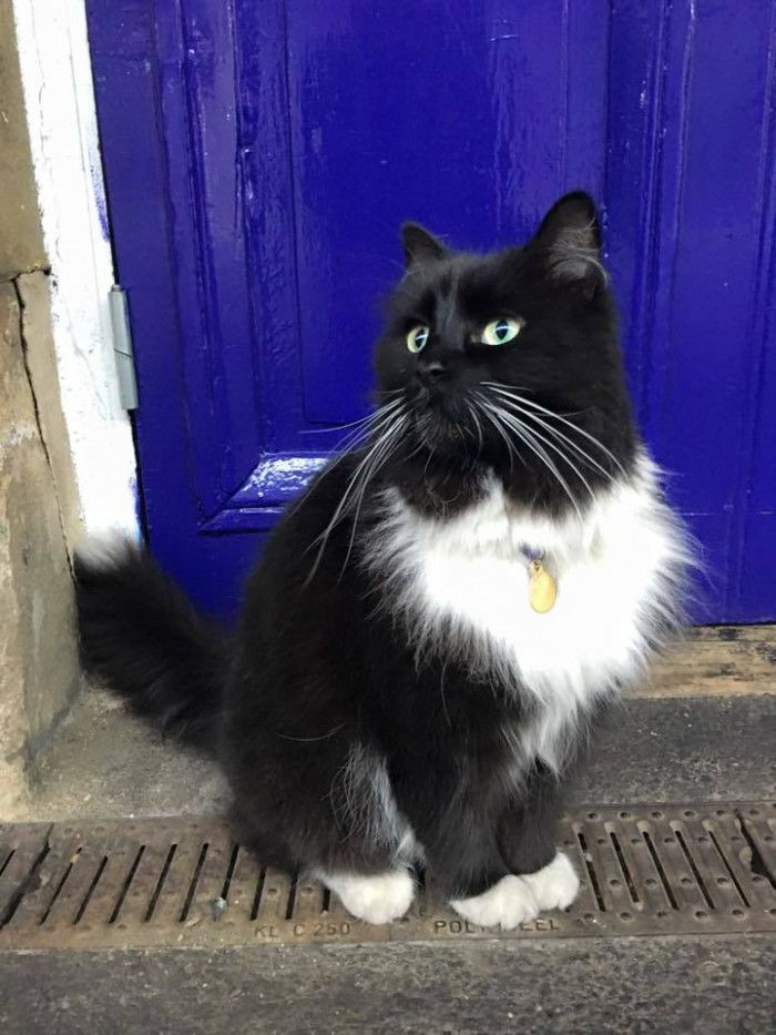 イギリスはウエストヨークシャー州にあるHuddersfield(ハダースフィールド)は人口約17万人の街。そこに一匹の駅猫フィリックスがいます。彼女はこの駅で勤務して今年で5年目。勤務態度も良好で、駅利用者の人気者です。