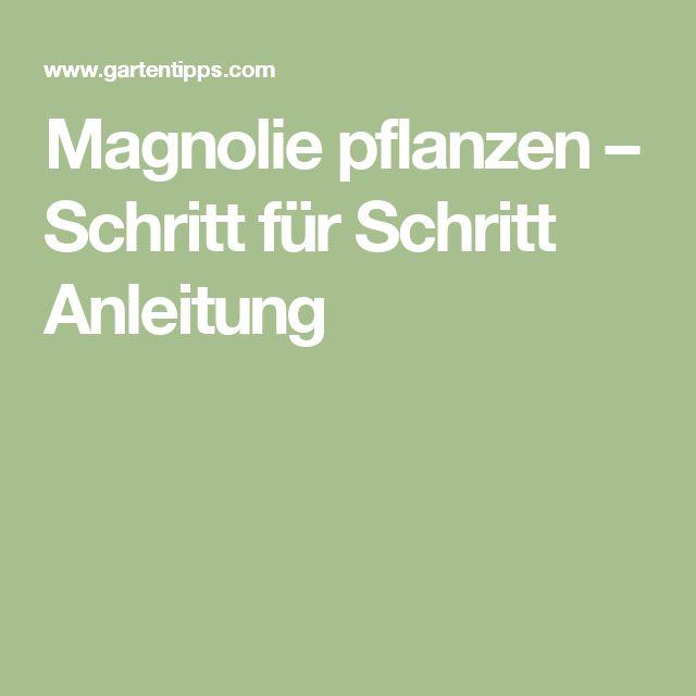 25+ Best Ideas About Magnolie Pflanzen On Pinterest | Bloemen ... Tulpen Im Garten Tipps Rund Um Die Pflege Fur Die Fruhlingsblumen