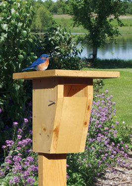 DIY Bluebird House | Grit Magazine