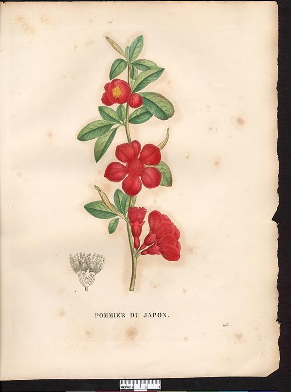 les 25 meilleures id es concernant tatouages de fleurs de pommier sur pinterest tatouages aux. Black Bedroom Furniture Sets. Home Design Ideas