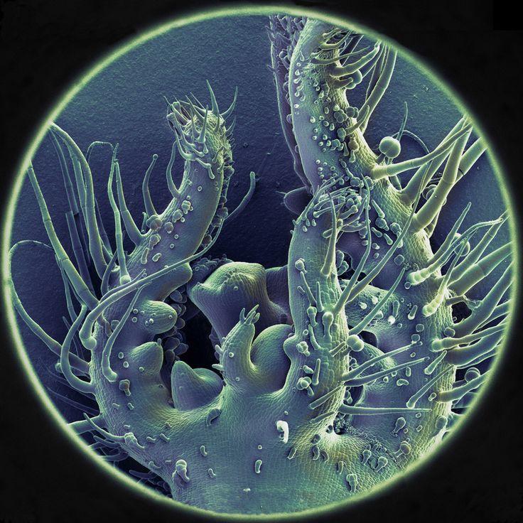 Colored SEM's (Scanning Electron Microscopy) - Adriaan van Aelst, colour Robin Noorda