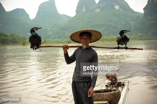cormorant fisherman - Google Search