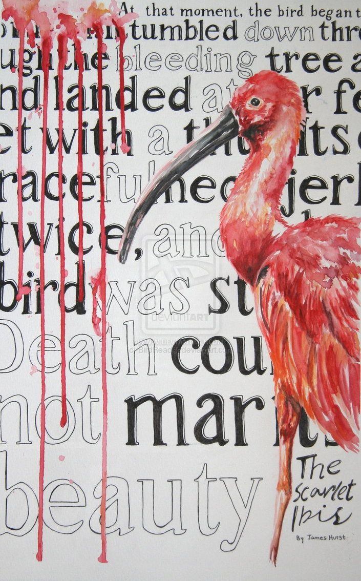 7 best the scarlet ibis images on pinterest scarlet short the scarlet ibis by james hurst short but so powerful buycottarizona Choice Image