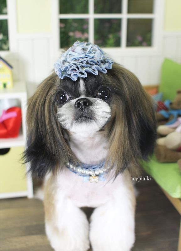 Korean Dog Grooming Style Shih Tzu Dog Grooming Styles