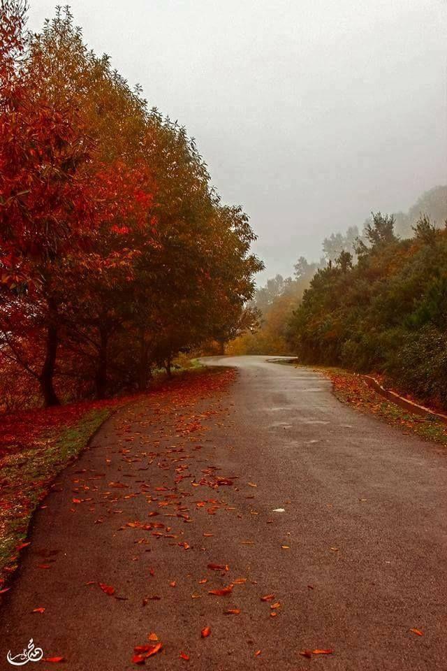 إليك أجمل و أروع 18 صورة لفصل الخريف في الجزائر في بلادي Algeria Country Roads Around The Worlds