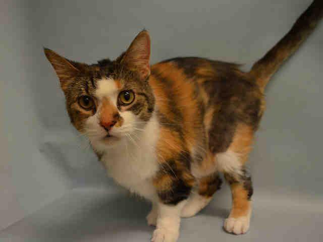 Declawed Cats For Adoption San Antonio