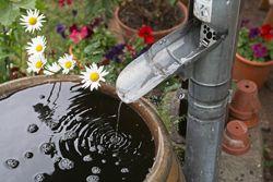 Mückenlarven in der Regentonne vernichten – Tipps zur Vorbeugung & Bekämpfung