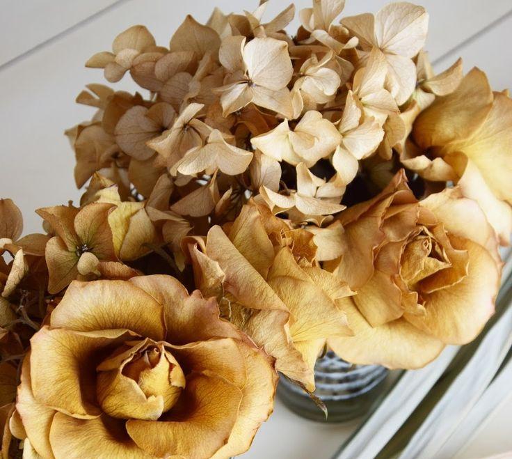 die besten 25 hortensien trocknen ideen auf pinterest hydrangea farben hortensien und hortensie. Black Bedroom Furniture Sets. Home Design Ideas