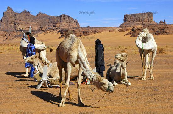 Nomaden In Der Wüste