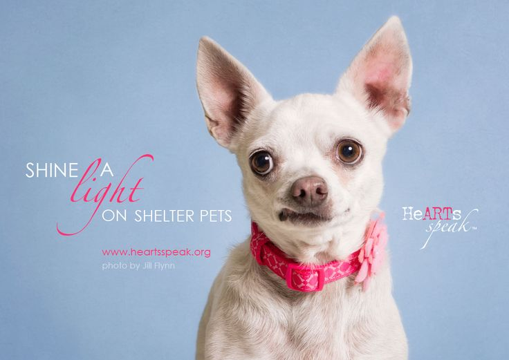 You can help #ShineALight on shelter animals! Join our end of year campaign to bring professional quality photos to shelter pets.