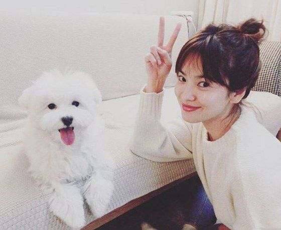Song Hye-kyo with her pet @ HanCinema :: The Korean Movie and Drama Database