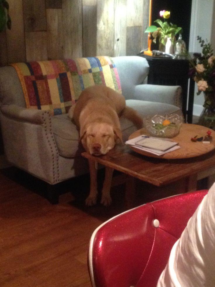 Dog stopped working http://ift.tt/2eU9dYO