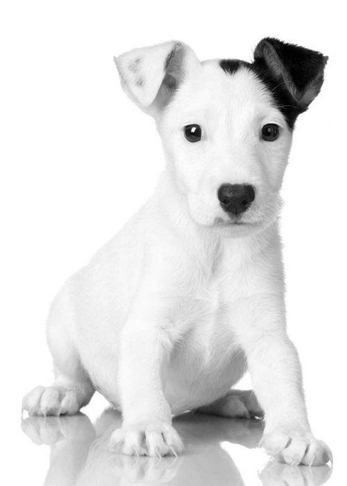 Vinegar & Water Spray for Puppy Nipping