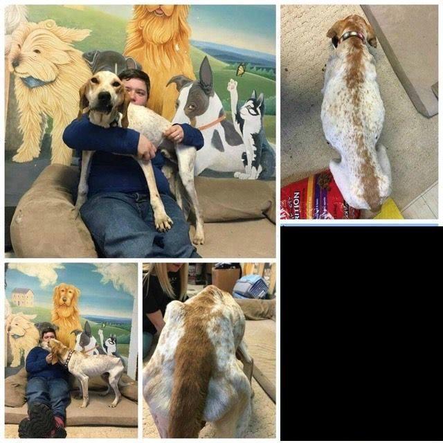 English Coonhound dog for Adoption in See Website, CA. ADN-467885 on PuppyFinder.com Gender: Male. Age: Adult