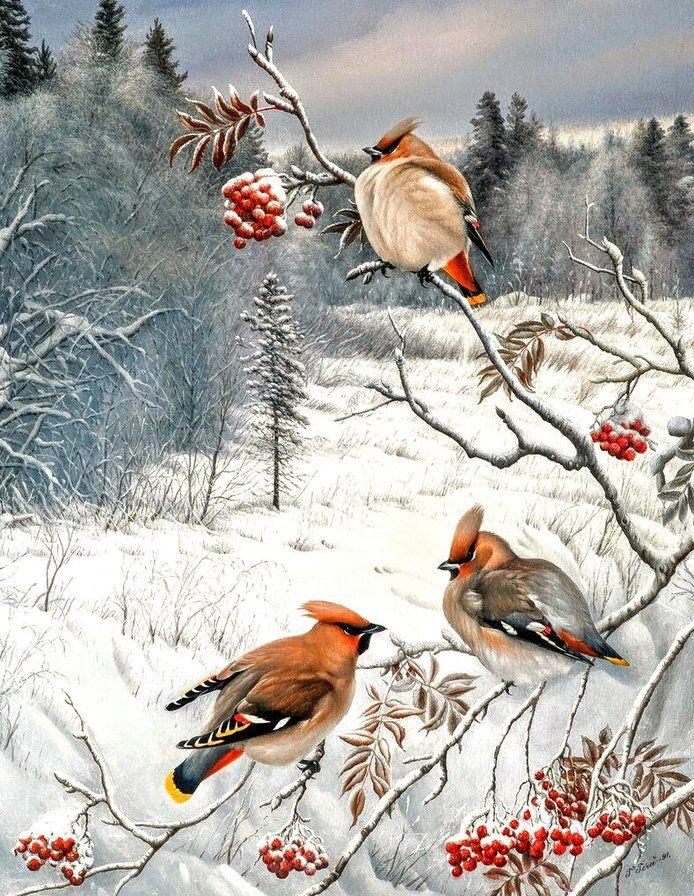 Зимний лес с птицами картинки для детей