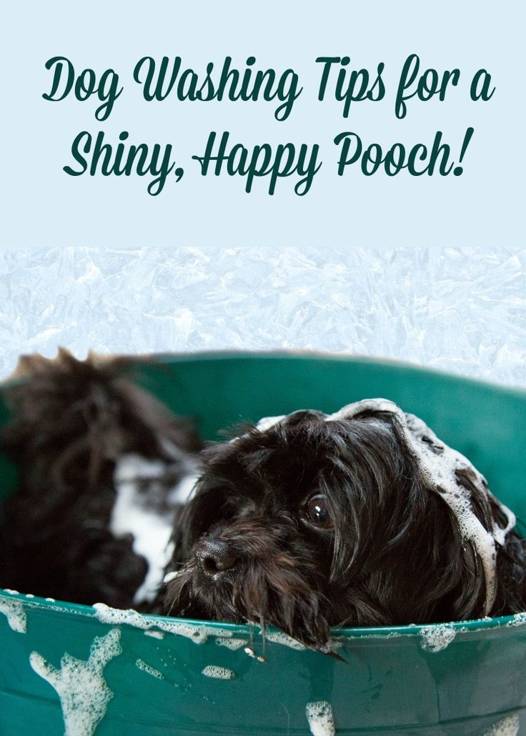 22 best dog grooming images on pinterest dog grooming dog dog washing tips for a shiny happy pooch solutioingenieria Image collections